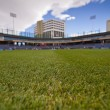 Stadium Grass — Stock Photo