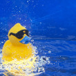 Stock Photo: Rubber Duck
