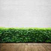 Wall, wood floor and bushes — Stock Photo