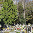 The graven on cemetery — Stock Photo