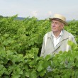 Stock Photo: Senior in vineyard