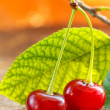 Sour cherries - Foto de Stock