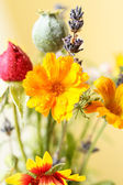 полевые цветы — Стоковое фото