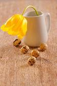 Křepelčí vejce a Tulipán — Stock fotografie