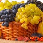 Autumn fruits — Stock Photo #30682243