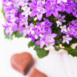 Stock Photo: Spring flowers and chocolate