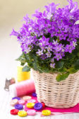 Still life with spring flowers and colorful buttons — Foto de Stock