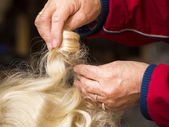 Hands of hairdresser — Stock Photo
