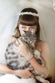 Bride with a cat — Stock Photo