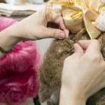garota fazendo penteado — Fotografia Stock  #44678433