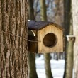 Birdhouse — Foto Stock #24068099