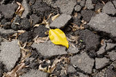 Yellow leaf lies on the pavement — Stock Photo