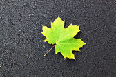 Green leaf on black asphalt — Stock Photo