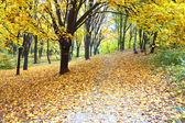 Beautiful colorful autumn park — Stock Photo