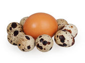One egg and quail eggs — Stock Photo