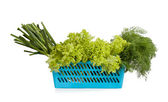 Blue plastic basket with young garlic, lettuce and dill — Stock Photo