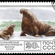 USSR - CIRCA 1977: a stamp printed in USSR, shows a walrus family, CIRCA 1977 — Stock Photo