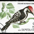 USSR - CIRCA 1979: a stamp printed in USSR, shows a woodpecker bird — Stock Photo #28129543