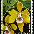 CUBA - CIRCA 1980: a stamp printed in CUBA, shows an orchid flower, CIRCA 1980 — Stock Photo