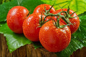 Vine Ripened Tomatos — Stock Photo