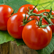 Red Tomatos — Stock Photo #23948445