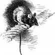 Hand Drawn Black Rat — Stock Photo