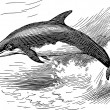 Hand Drawn Dolphin — Stock Photo