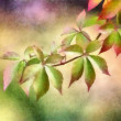 Watercolor Branch Of Leaves — Stock Photo