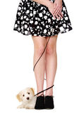 Lady's legs tangled with a puppy on a black lead — Stock Photo