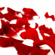 Red rose petals — Stock Photo