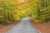 Road in the colorful, autumn woods — Stock Photo