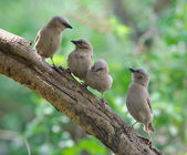 A flock of birds on a branch — Stock Photo