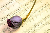 Faded rose is on sheet music — Stock Photo