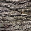 Bark of old tree — Foto Stock #24538325