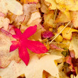 Not just Aufumn or Fall leaves — Stock Photo