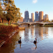 Swans on the yarra river — Stock Photo #27006253