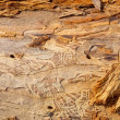 Stock Photo: Groovy wood