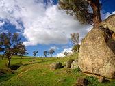 Rocks, treees and grassland — Stock Photo