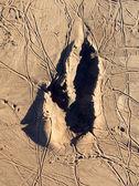 çamurlu kanguru parmak pençe — Stok fotoğraf