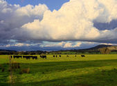 Stormy farmland in australia — Stock Photo