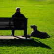 Faithful companion — Stock Photo