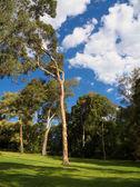 Beautiful parkland — Stock Photo