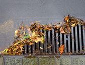 Flood of leaves — Stock Photo