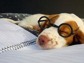 Hard days work at puppy school — Stock Photo