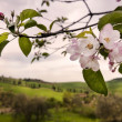 Italy, tuscany hills in spring — Stock Photo