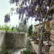 Wisteria in a terrace - Stock Photo
