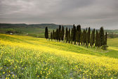 Italy Tuscany Val d'Orcia — Stock Photo