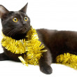 Black kitten and tinsel — Stockfoto