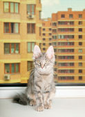 Grey kitten sits on a sill — Stock Photo