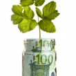 Sapling growing from euro money — Stock Photo #29447099